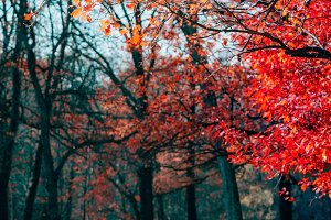 Fantasy scene of red trees