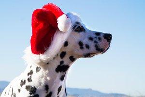 christmas dogs