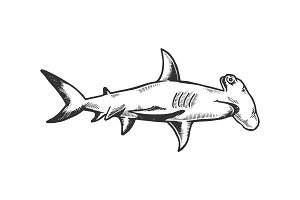 Great hammerhead shark engraving