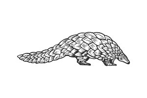 Pangolin animal engraving vector