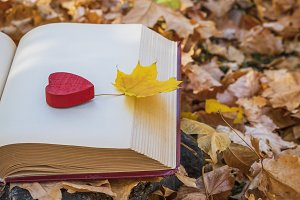 yellow maple leaf and book