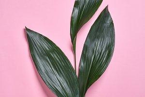 Palm green leaves pattern. Creative