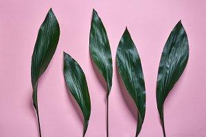 Tropical green leaf pattern, natural