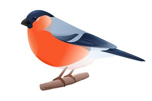 Bullfinch Bird Illustration