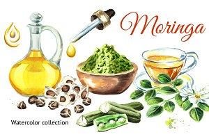 Moringa. Watercolor collection