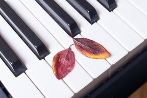Musical piano keys and autumn leaves