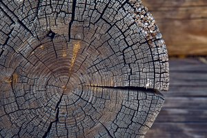 round saw cut old logs in the house