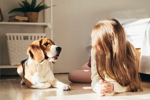 Young girl playing with puppy beagle