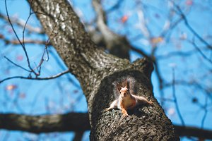 Cute squirrel on a tree