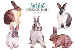 Watercolor Rabbit Clipart