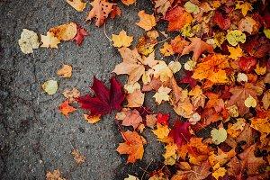 Autumn Leafes