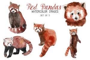 Watercolor Red Panda Clipart