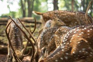 Flock of cute deer in the zoo