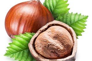 Ripe brown hazelnut and kernel of ha