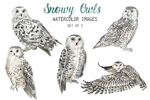 Watercolor Snowy Owls Clipart