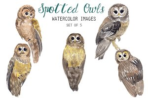 Watercolor Spotted Owls Clipart