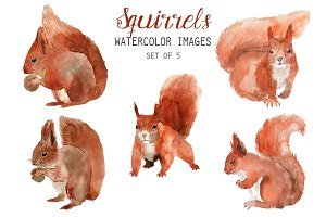 Watercolor Squirrels Clipart