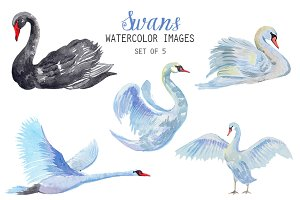 Watercolor Swans Clipart