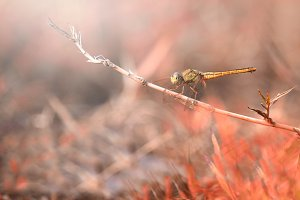 dragonfly on the twig