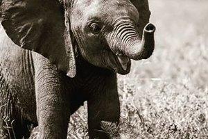 Lovely Little Elephant