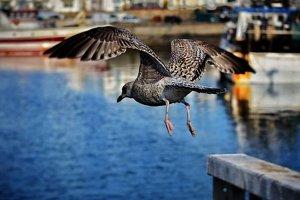 Ocean Bird ready to catch fish