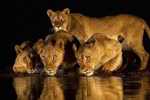 Wild Life, Animals.