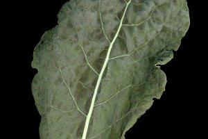 black kale vegetables food