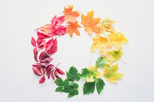 flat lay of autumnal maple leaves in