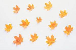 set of orange autumnal maple leaves