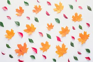 set of different leaves isolated on