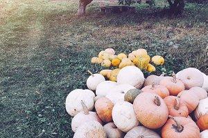 Autumn pumpkins in the garden