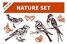 Bird & Butterfly Hand Drawn Set
