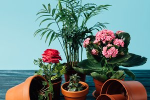 close up view of plants in flowerpot