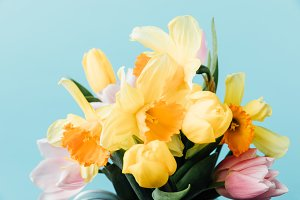 close up view of beautiful tulips an