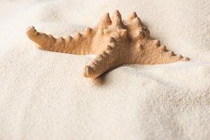 Large starfish on summer sandy beach