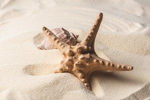 Sea starfish and shell on sandy beac