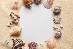 Frame of various seashells on sandy