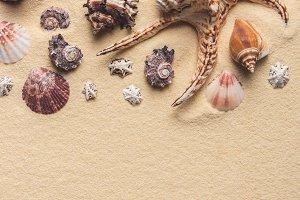 Beautiful seashells and starfish on