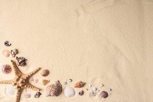 Seashells and starfish border on lig