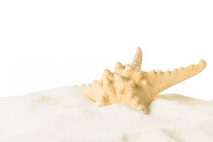 Starfish in beach sand isolated on w