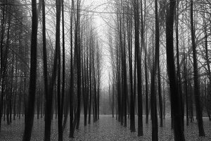 Vertical black and white trees with