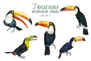 Watercolor Toucans Clipart