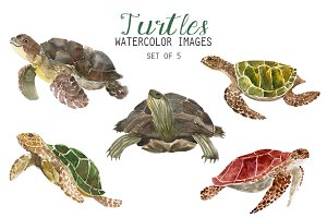Watercolor Turtles Clipart