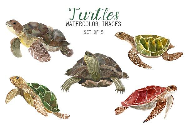 Watercolor Turtles Clipart Pre Designed Photoshop Graphics Creative Market