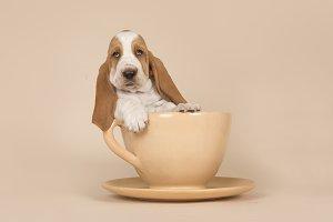 Cute basset hound puppy in a cup
