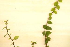 Meandering vines