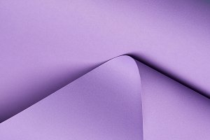 close-up view of beautiful violet an