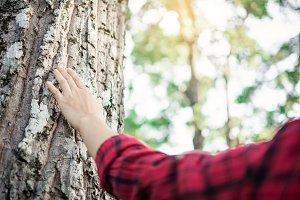 Human touching big tree