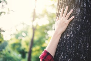 Human touching big tree