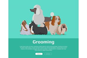 Dog Grooming Banner. Long Haired Dog